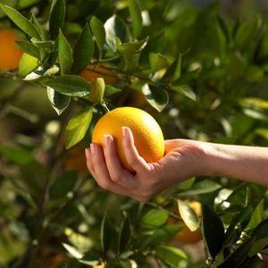 The false economy of focusing onlow hanging fruit